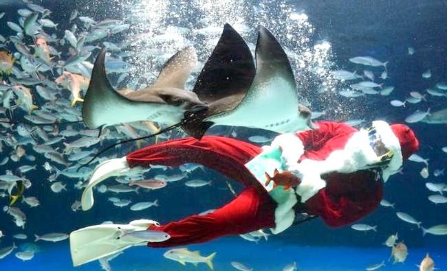 В Японії з'явився різдвяний акваріум: У Токіо Новий рік відзначають двічі - традиційно 31 грудня і в кінці лютого (за місячним календарем). Різдво там зазвичай