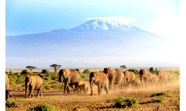 У Кенії можна буде спостерігати міграцію слонів: Зараз влада Кенії пообіцяли повернути туристам можливість спостереження за щорічній міграцією слонів. Якщо проект приверне значну кількість туристів, то в