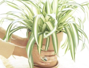 Вплив музики на рослини: наукові відкриття і практична користь