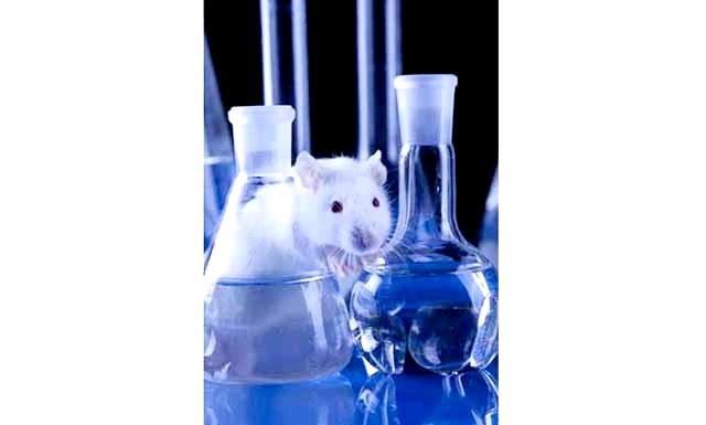 Набула чинності заборона тестування косметики на тваринах: Тестування готової косметики на тваринах на території Європейського союзу заборонили ще в 2004 році. П'ятьма роками пізніше заборонили також тестувати