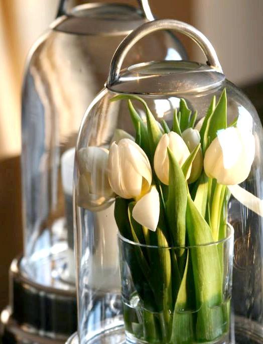 Вигонка квітів або живі квіточки до новорічних свят: ПЕРШИЙ ШАГНужно заготовити цибулини для вигонки. Для вигонки підійдуть тюльпани, гіацинти, нарциси, крокуси. Цибулини повинні бути