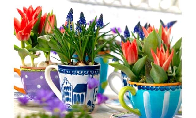 Вигонка квітів або живі квіточки до новорічних свят: А як робите вигонку ви? Поділіться своїми секретами.