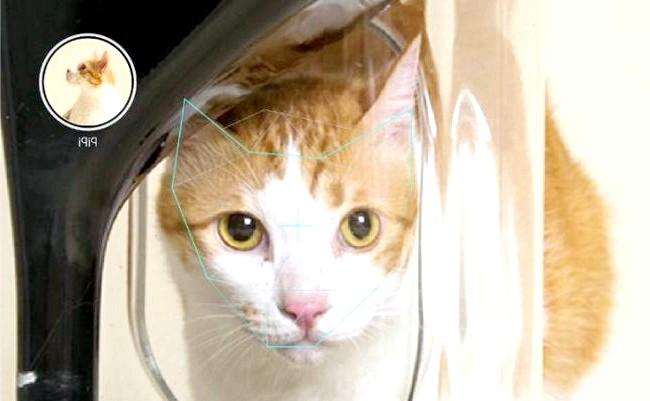 Дбайливий гаджет для кішок: Ця чудо-годівниця, оснащена вагами і відеокамерою, здатна не тільки пізнати тварина за його морді, але і стежити за тим, щоб