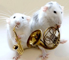 вплив музики на тварин