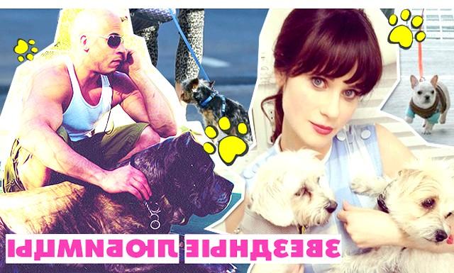 Зоряні улюбленці: собаки проти кішок: Багато знаменитостей люблять тварин. Деякі популярні артисти, співаки та моделі навіть складаються в організації з захисту прав тварин PETA. Деякі