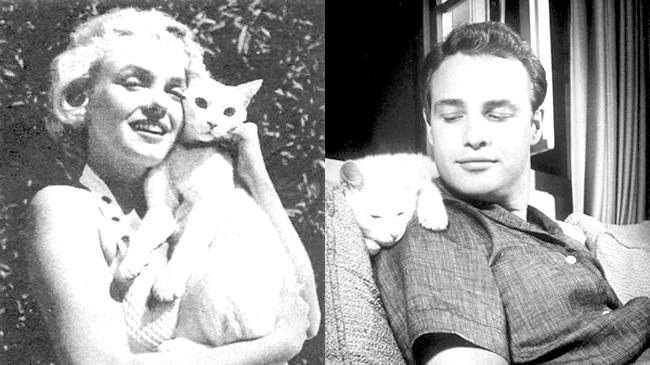 Зоряні улюбленці: собаки проти кішок: У наш час знаменитості беруть із собою кішок і собак куди завгодно: актори на зйомки фільму і пробіжку в парку,
