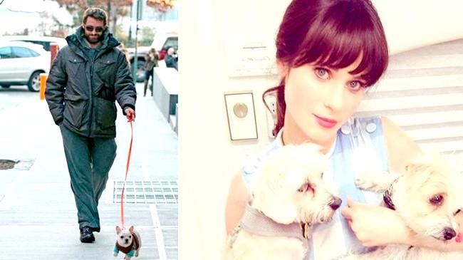 Зоряні улюбленці: собаки проти кішок: