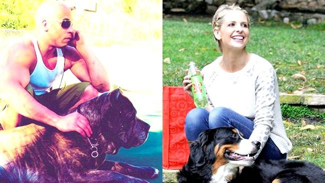 Зоряні улюбленці: собаки проти кішок: КошкіМногіе люблять кішок за їх норов. Маленькі пухнасті кошенят завжди піднімуть настрій, а дорослі коти і