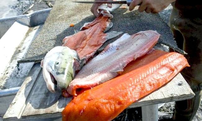 Головні страви та продукти різних країн: Мідний річковий лосось, Аляска, СШАЛедяние річки Аляски є точкою фінішу для міграції лосося, тому спіймана саме