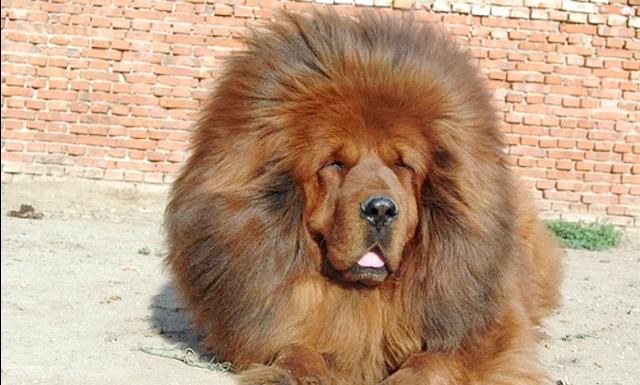 Собака замість лева: Відвідувачка привела дитину в зоопарк спеціально, щоб продемонструвати йому, як гарчить дикий хижак. Але коли тварина, що знаходиться в клітці з