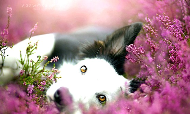 Аліція змусловская і її улюблені собаки