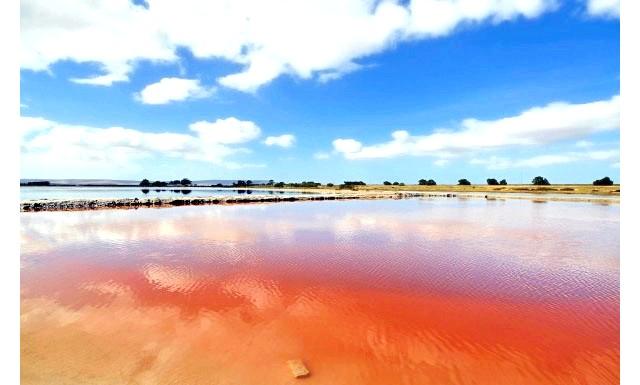 Чудеса природи: рожеві озера і пляжі: Соляні промисли Red Velddrif.