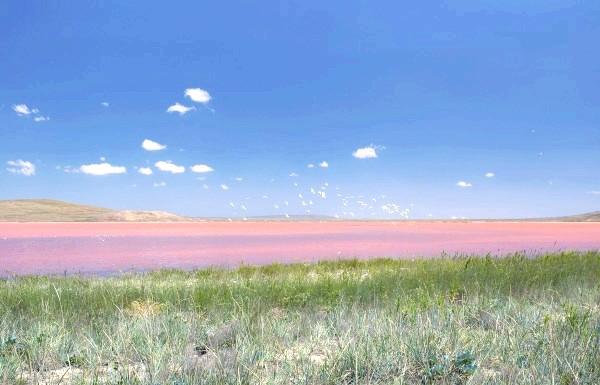Чудеса природи: рожеві озера і пляжі: Кояшське озеро входить в ряд солоних мілководних озер в Криму під назвою Сиваш або'Гнилое море'( из-за мелководья вода в