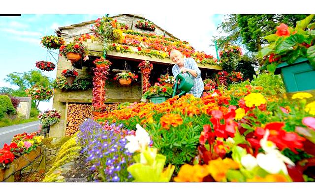 Квітковий дім: Щорічно пара витрачає на нові насіння та благоустрій теплиць не одну тисячу фунтів стерлінгів. Щоб не турбуватися про те, що