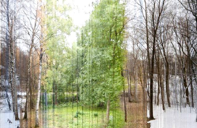 Фотографії, на які неможливо дивитися байдуже: Російський ліс. Ця фотографія складається з 365 фотографій, які робилися кожен день з одного і того ж місця.