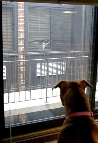 Фотографії, на які неможливо дивитися байдуже: Сусіди