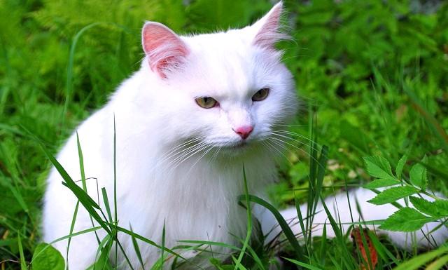 Цікаві факти про кішок: - У кожної кішки унікальний малюнок на носі. Він ніколи не повторюється, як і відбитки пальців людини;
