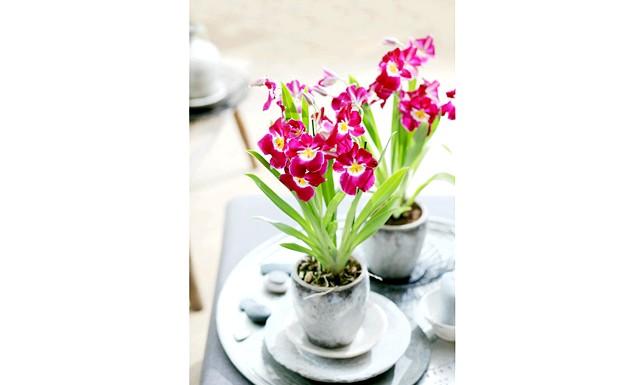 Королева квітів - орхідея. як за нею доглядати?