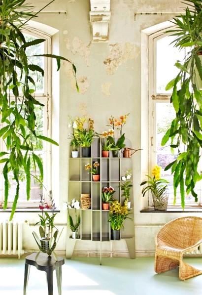 Королева квітів - орхідея. Як за нею доглядати ?: