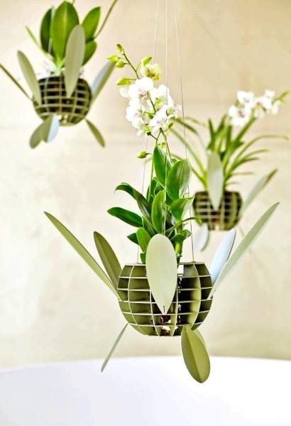 Королева квітів - орхідея. Як за нею доглядати ?: Догляд за орхідеєю Через уявну ніжності і крихкості орхідей існує думка, що ці рослини дуже вибагливі
