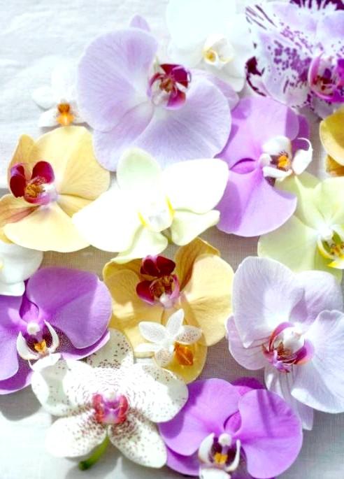 Королева квітів - орхідея. Як за нею доглядати ?: [i] Додаткову інформацію та корисні поради по догляду за окремими сортами орхідей можна знайти на сайті: http://orchidsinfo.eu/ru [/ i]