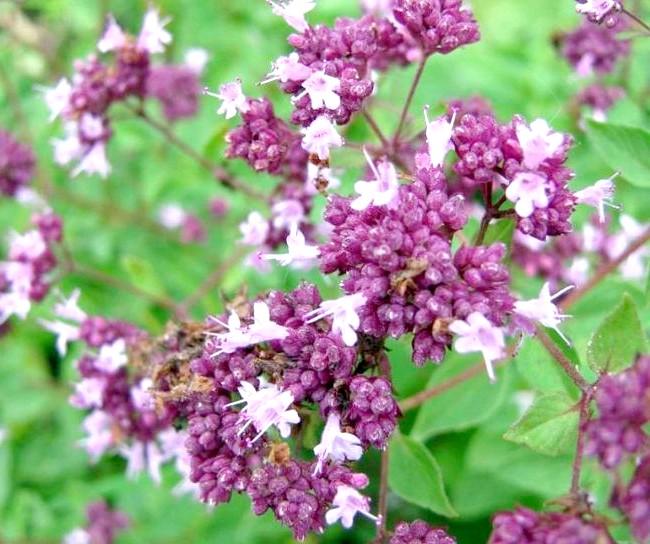 Вихідні на озері Інголь: А я із задоволенням повзала в траві, фотографуючи різні квіточки ...